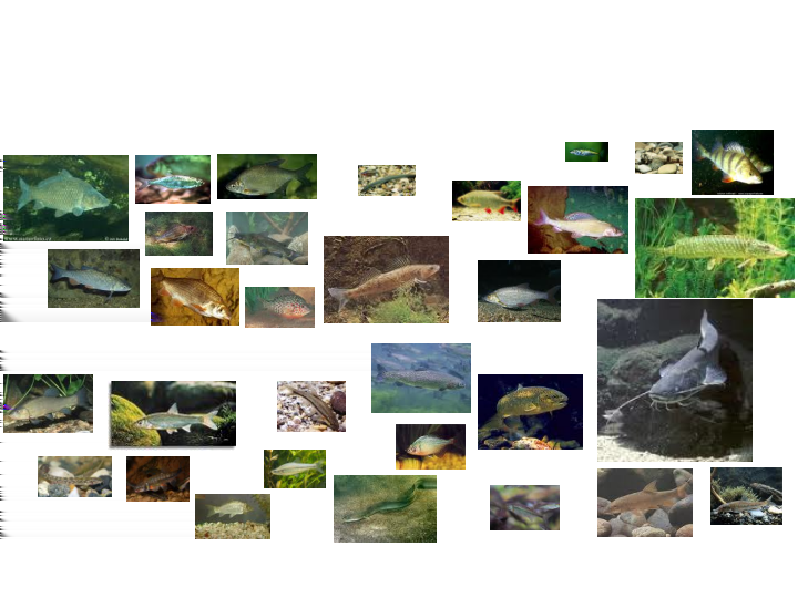 Many fish species can be found Éric PARENT et al.