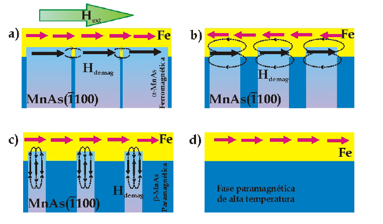 2D. Fe/MnAs films: Magnetic Hysteresis measured by resonant magnetic X-ray scattering: magnetic coupling between MnAs