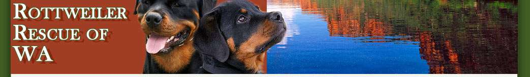 com Mobile:0438 850 748 Email: rottweilerrescuesa@hotmail.com Kerryn O Brian PO Box 106 Two Wells SA 5501 Mobile:0438 850 748 Email: rottweilerrescuesa@hotmail.