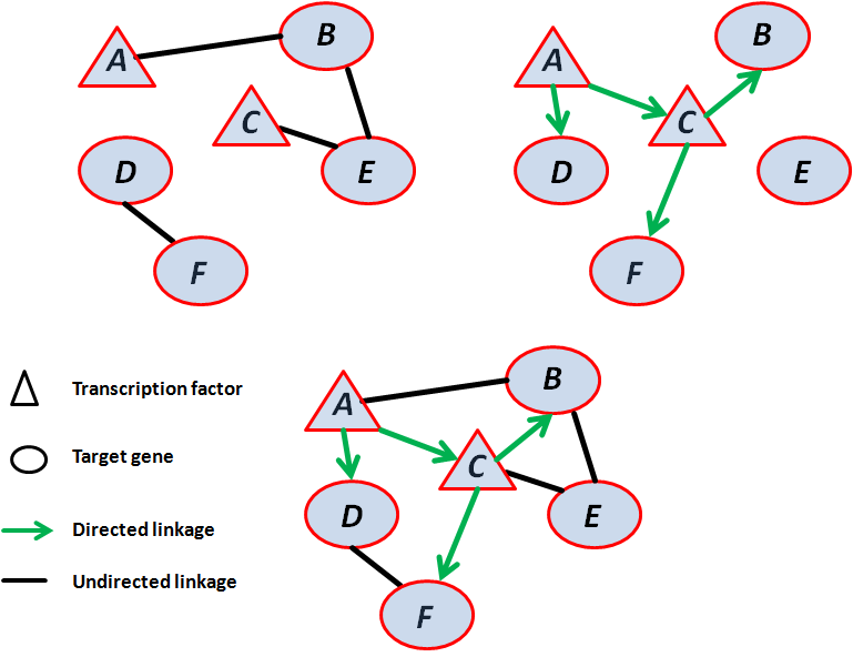 Chapter 2. Literature review pertaining to verified or predicted mechanisms which give rise to causality. Hybrid networks encompassing both directed and undirected linkages can also be compiled.