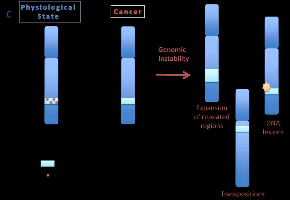 336 M. Trombetta-Lima, Th. Jacomasso, Sh. M. B. Winnischofe et al. Figure 1. Epigenetic mechanisms influencing genes fate.