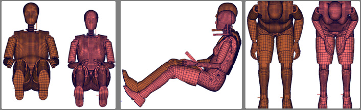 Young et al. (1983). The EvaRID V1.0 dummy model maintained the same pelvis angle of 26.5 degrees as the BioRID II. The seated height was defined as the standing height less 774 mm (Diffrient et al.