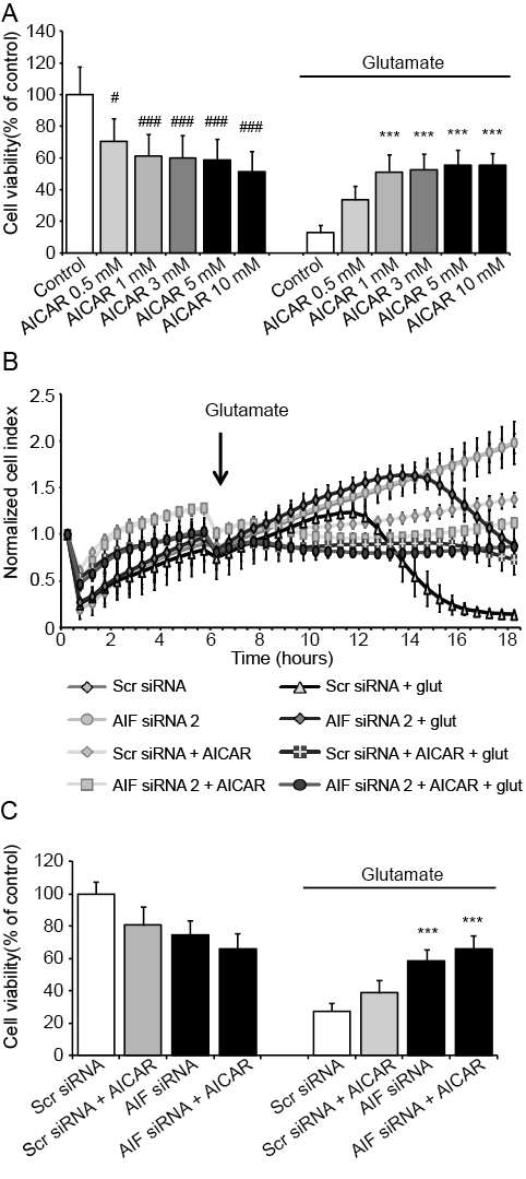Results 58 Figure 9: Protective effect of AICAR in HT-22 cells.