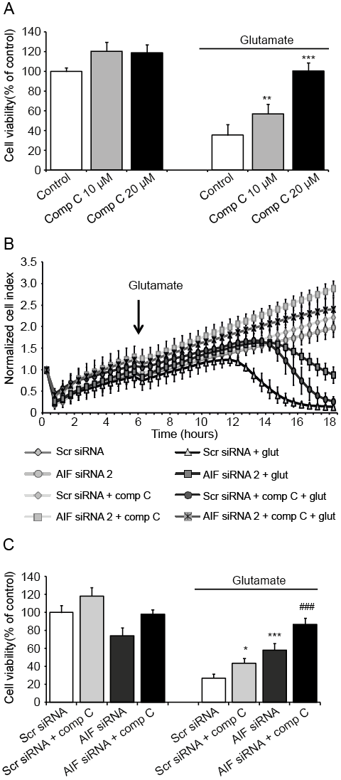 Results 59 Figure 10: Compound C exerts additive protective effects on AIFdepleted cells in providing neuroprotection against glutamate toxicity.