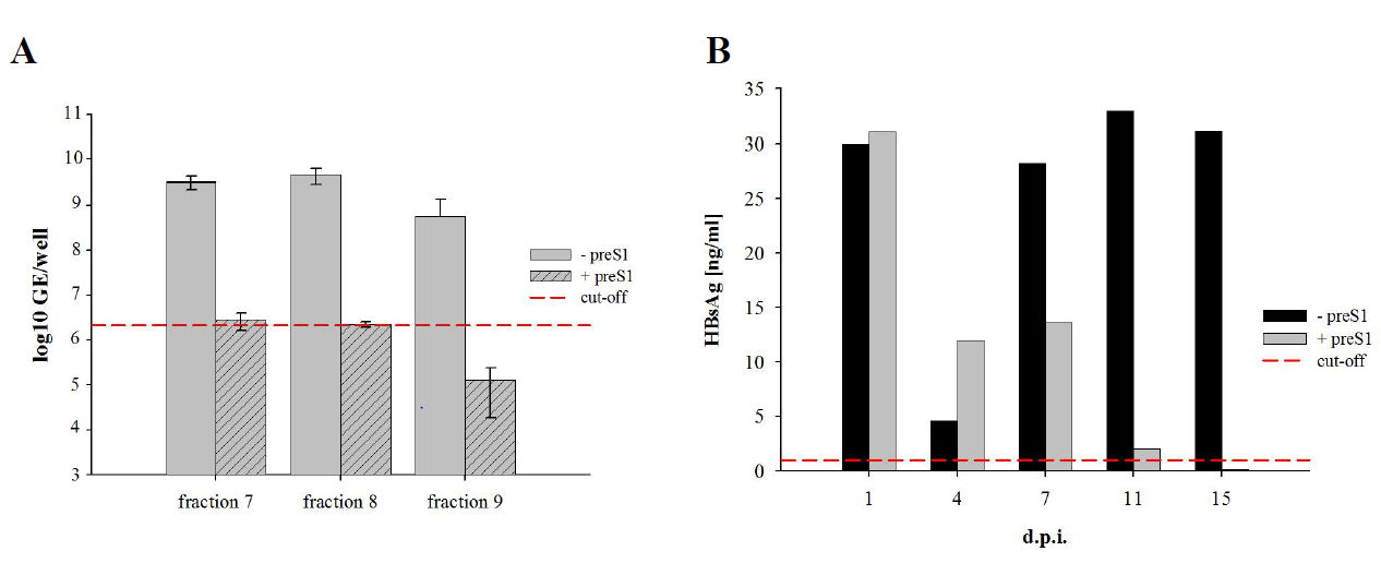 Results Figure 24: Infection of PTHs with patient derived HDV purified by sucrose gradient centrifugation.