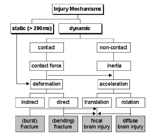 focal injuries as direct contact loading and rotational acceleration can produce diffuse axonal injuries (Figure 2-4)(Simms & Wood, 2009).