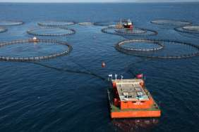 Cages at multiple locations The largest fish farm operator in Turkey and one of the largest in Europe with modern and efficient operations Cages in diverse locations Location Species # of fish