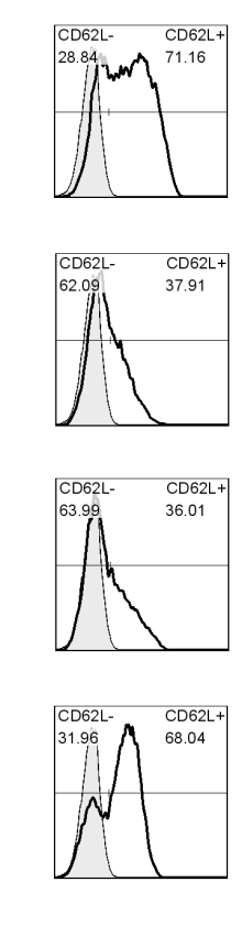 % of Thy1.1 cells % CD4 cells % CD4 cells % CD62L high Figure 2.