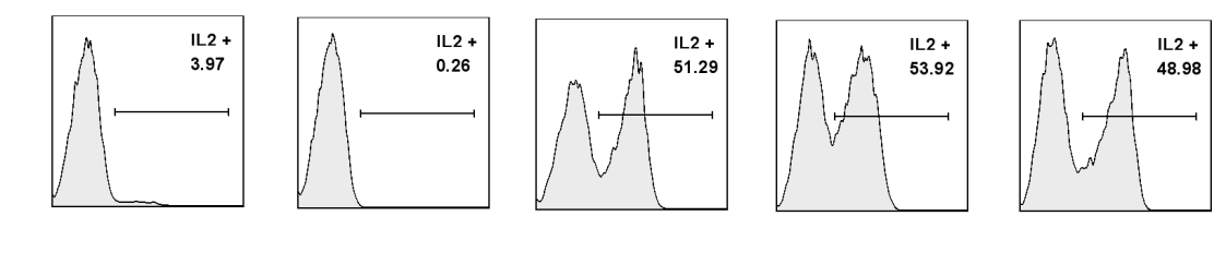 this is often considered a Th1-type cytokine. I therefore went on to look at the kinetics of expression of CD4L and IL-2 during the whole of the 5 day culture period. Figure 4.