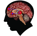 18 How does stimulation of the brain s pleasure circuit teach us to keep taking drugs?