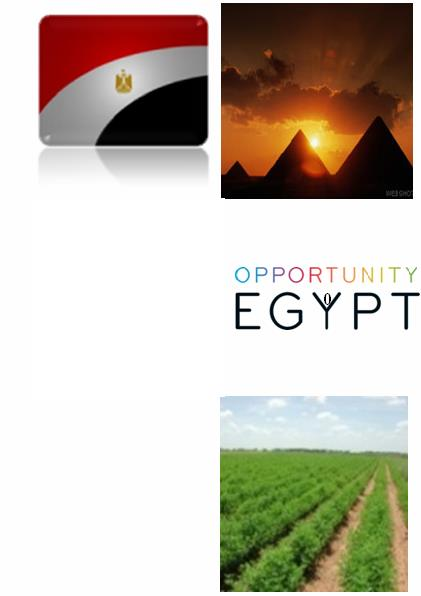 Consulate of Egypt Commercial Office Milan Doing Business In Egypt & Opportunities For The Italian Companies