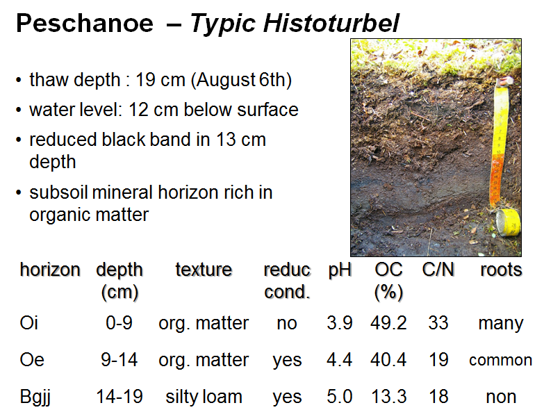 Diversity of Permafrost-Affected Soils in Northern Siberia in the depth of 14 cm to 19 cm. The EC decreased with depth from 139.1 µs cm -1