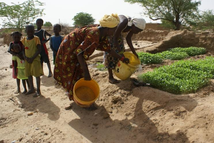 Even though Guédé-Chantier has been a member of a network of eco-villages in Senegal since 2007, the agricultural practices are mainly conventional, with the widespread use of fertilizers and