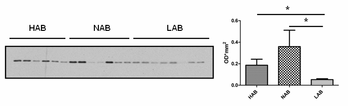 Biomarker discovery in HAB/NAB/LAB mice bicarbonate ions, facilitating the transport and elimination of carbon dioxide from tissues (Breton, 2001). A B Figure 6.