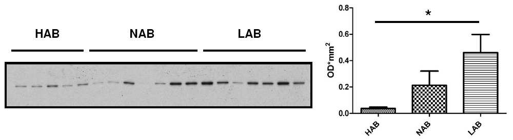 Biomarker discovery in HAB/NAB/LAB mice A B Figure 6.5 Increased Myh10 expression in LAB mice A.