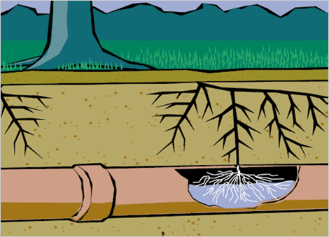 Large trees on a property contribute to this problem by having their roots migrate into the pipe which creates a blockage.