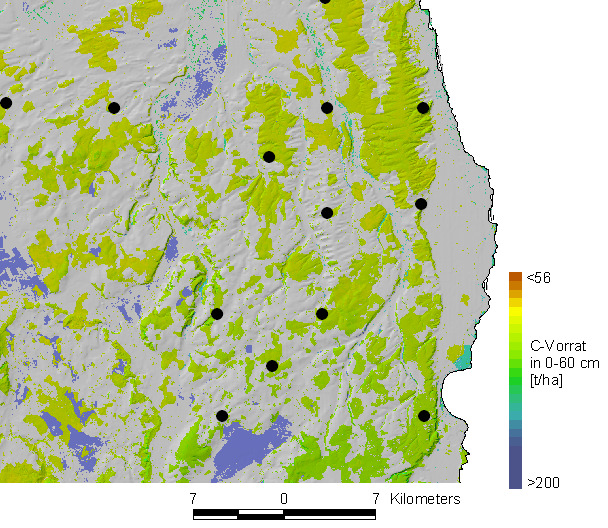 C-Models for forest soils in