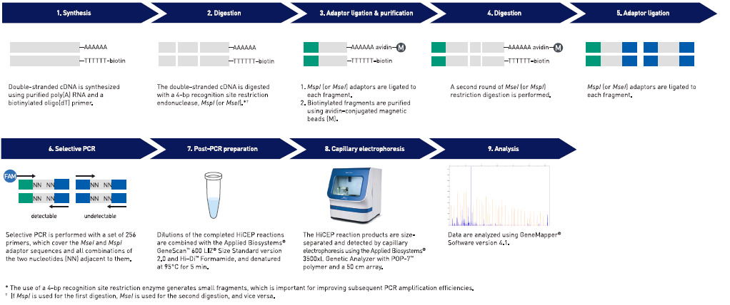 Chapter 8 Fingerprinting 8 Figure 35 HiCEP workflow For more information For documents and publications, see HiCEP applications on page 200.