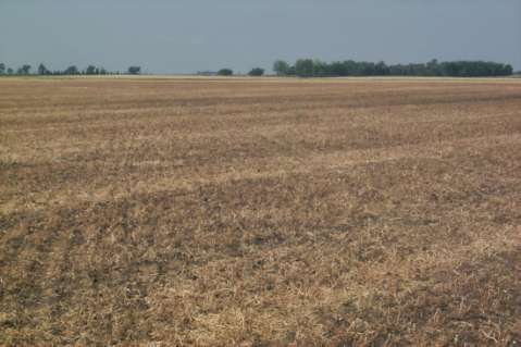 Field Pea Relay Cover Crop: Expanding the Benefits of Peas in