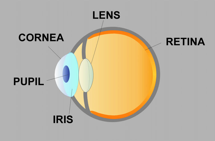 The Nearsighted And Astigmatic Eye 2. THE NEARSIGHTED AND ASTIGMATIC EYE The human eye is very much like a camera. The camera lens focuses light to form clear images onto film.