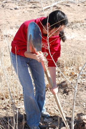 Primary Programs within the Black Institute: The Bosque Ecosystem Monitoring Program Science, Education, Stewardship The Bosque Ecosystem Monitoring Program (BEMP) is a joint project of the