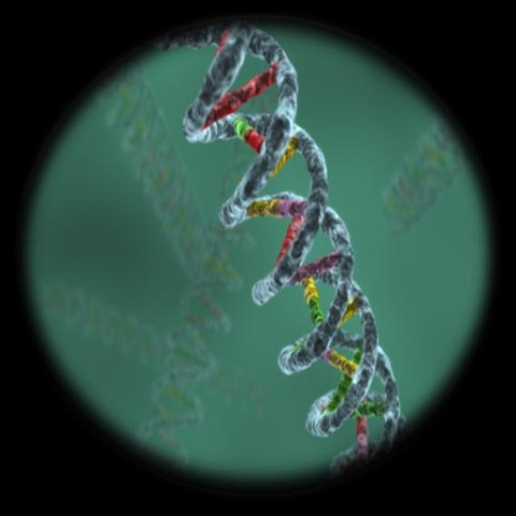 Clustal W: a program for alignment of nucleotide or amino acid sequences N = Number