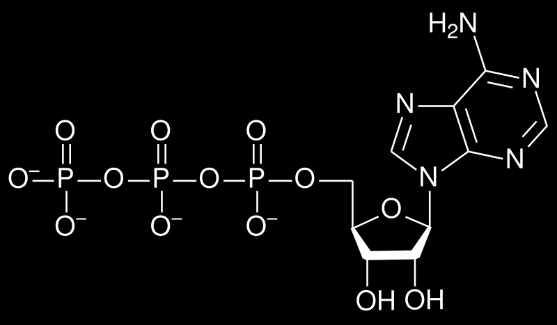 ATP What are the 3 parts of an ATP molecule?