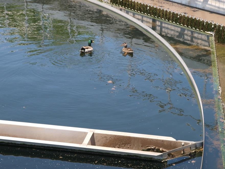 Phosphorus Removal In Wastewater Treatment by
