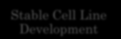 Our Services Recombinant Protein Expression Stable Cell Line Development Monoclonal