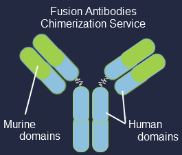 Antibody Chimerization Fusion Antibodies Antibody Chimerization Service allows you to rapidly convert the species isotype of your antibody to validate its potential in various therapeutic or