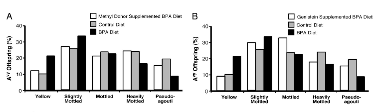 DNA hypomethylation can be counteracted by diet containing methyl