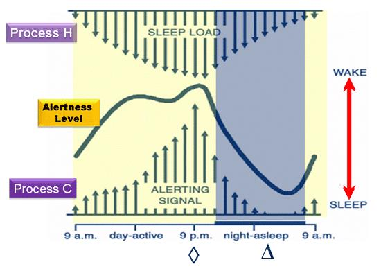 Two-process model HOMEOSTATIC DRIVE FOR SLEEP Endogenous Factors