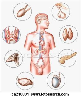 Endocrine System Compare and Contrast Endocrine and Nervous System