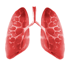 Respiratory System Structure and function of respiratory system Pulmonary