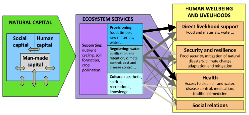 3. What policy questions can it be used for For showing the link between natural capital, biodiversity (stock) and ecosystem