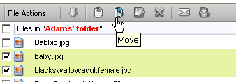 Illustration 64 Select files by highlighting folder and files Starting the Move Process Once the correct files are highlighted, click the Move icon.