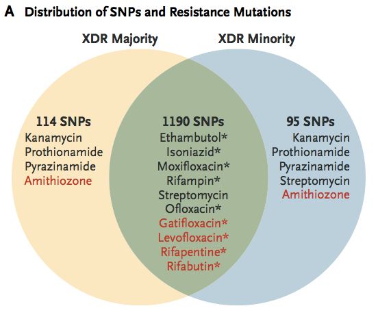extensively drug-resistant (XDR) M.