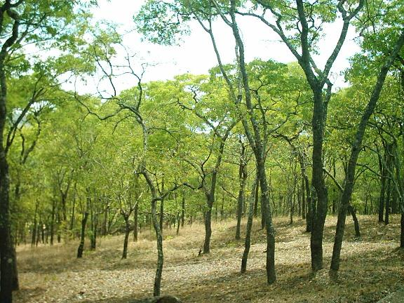 The purpose of the policy is to control deforestation, degradation and promote sustainable management of