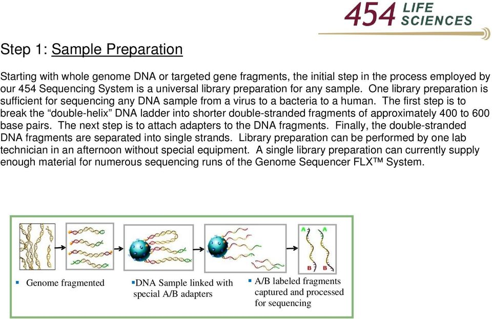 The first step is to break the double-helix DNA ladder into shorter double-stranded fragments of approximately 400 to 600 base pairs. The next step is to attach adapters to the DNA fragments.