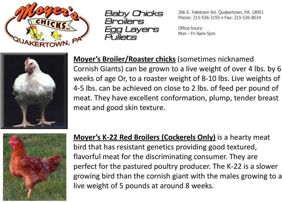 Moyer s K-22 Red Broilers (Cockerels Only) is a hearty meat bird that has resistant genetics providing good textured, flavorful meat for the discriminating consumer.