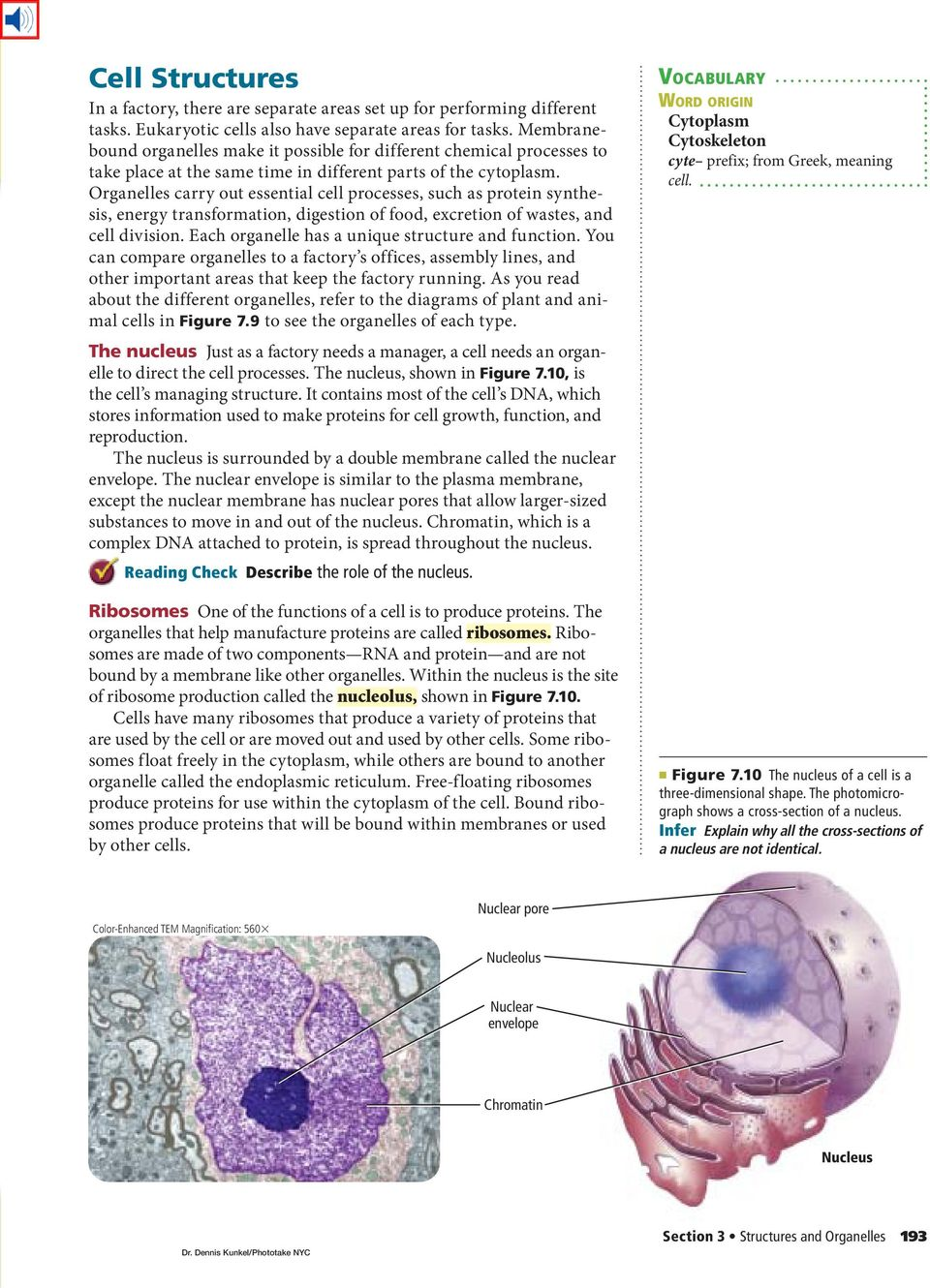 cell structure compared to function Cellular structure and function in this activity have students explore the gallery of cells for similarities and differences in cell structure and function.