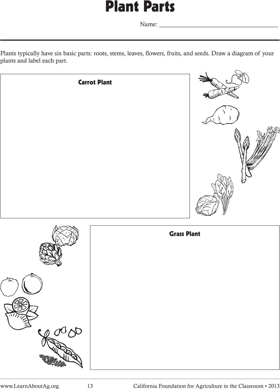 Draw a diagram of your plants and label each part.