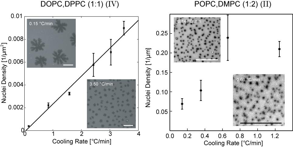 Chapter 5 Influence of Lipid Composition on Texture in Lipid Bilayers 5.8 Domain Nucleation 5.