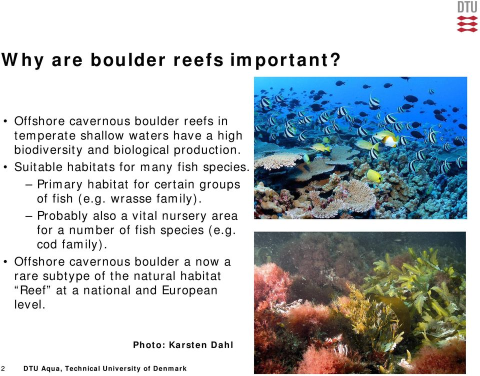 Suitable habitats for many fish species. Primary habitat for certain groups of fish (e.g. wrasse family).