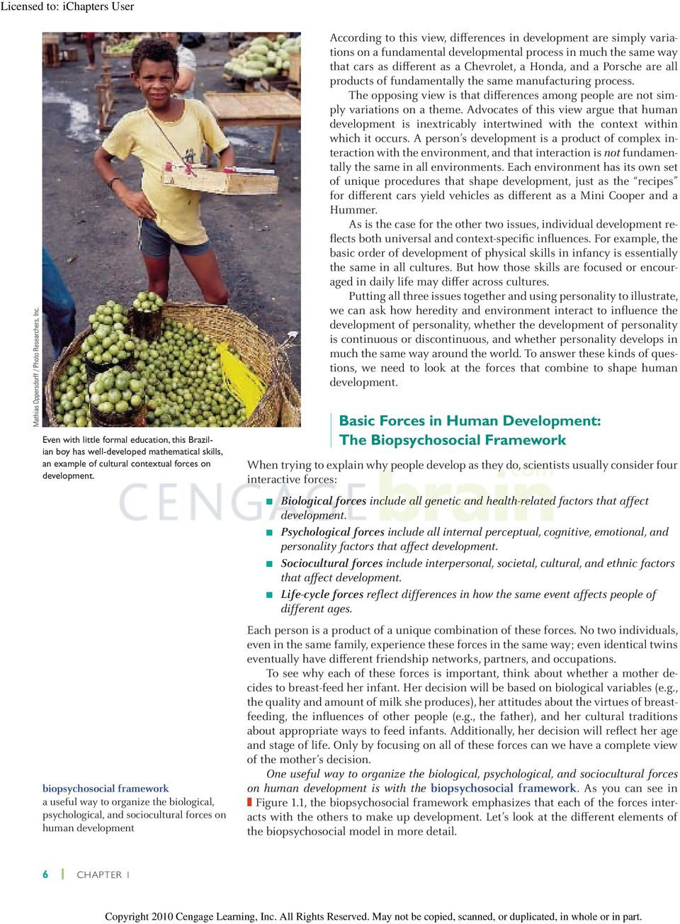 prenatal brain development prenatal lifecycle This article briefly outlines some of the key prenatal and early life influences on the development of adult weight and obesityin the 1980s nutrition and other lifestyle factors during several early periods in the lifecycle-just before conception.