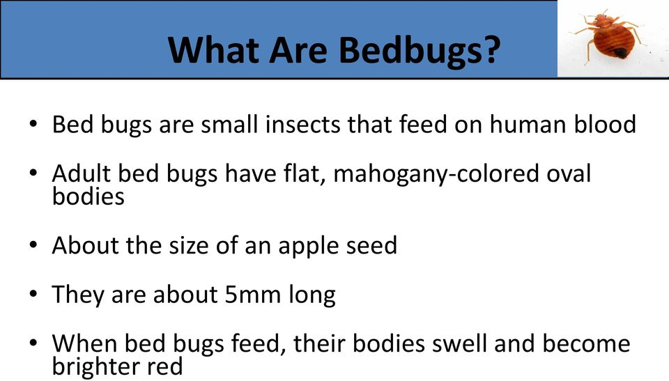 bed bugs have flat, mahogany-colored oval bodies About the