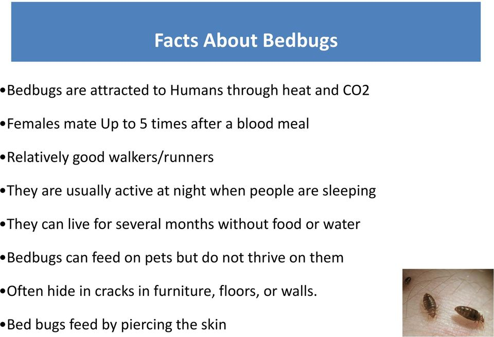 sleeping They can live for several months without food or water Bedbugs can feed on pets but do not