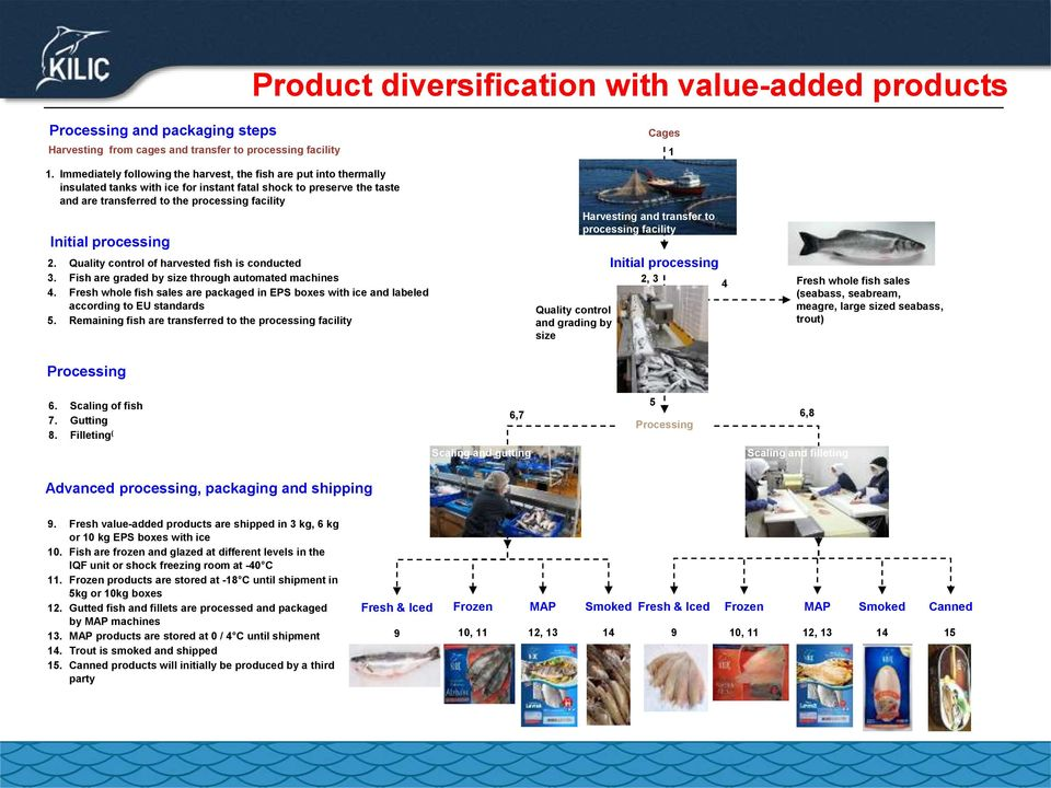 processing 2. Quality control of harvested fish is conducted 3. Fish are graded by size through automated machines 4.