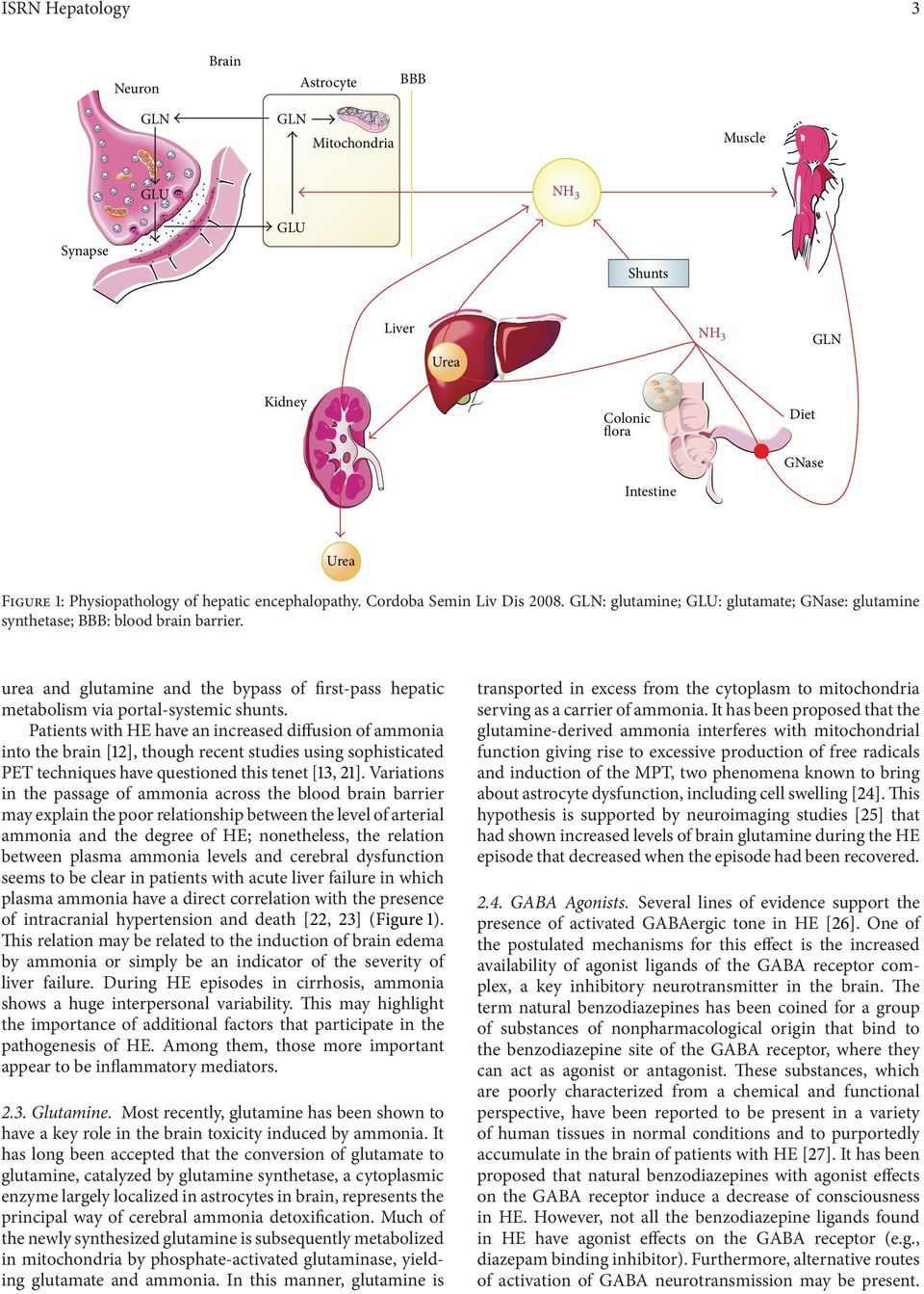urea and glutamine and the bypass of first-pass hepatic metabolism via portal-systemic shunts.