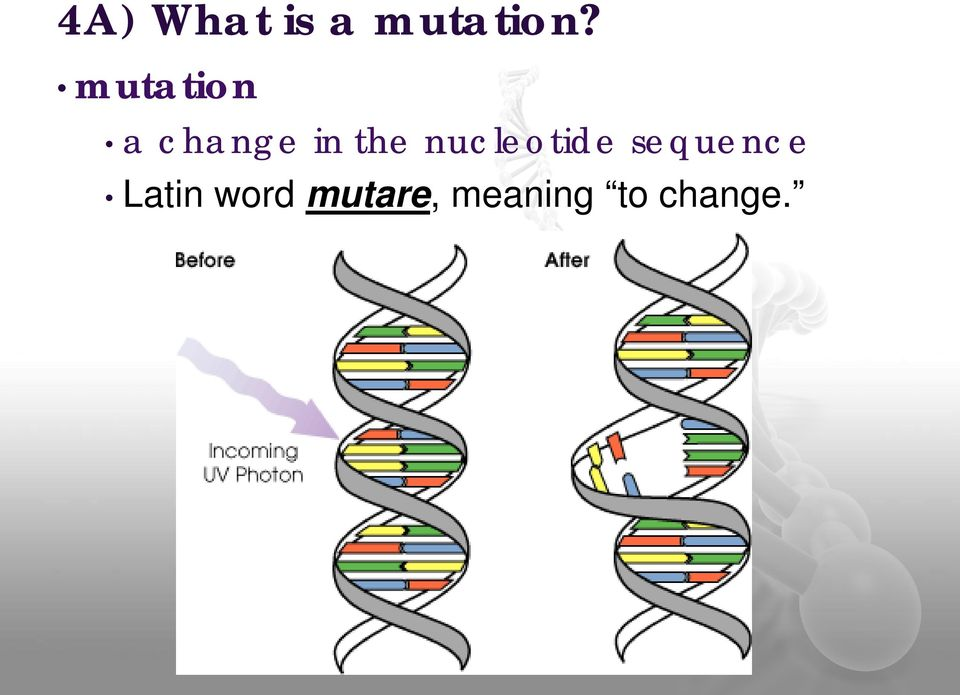 nucleotide sequence Latin
